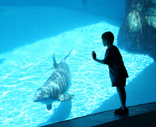 Things To Do In Chicago Museums Family Attractions And Parks